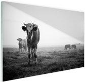 Zwart-wit koeien Glas 180x120 cm - Foto print op Glas (Plexiglas wanddecoratie) XXL / Groot formaat!