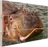 Zwemmende nijlpaard Hout 160x120 cm - Foto print op Hout (Wanddecoratie) XXL / Groot formaat!