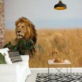 Fotobehang Lion | V8 - 368cm x 254cm | 130gr/m2 Vlies