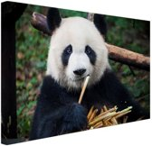 Panda die bamboe eet Canvas 80x60 cm - Foto print op Canvas schilderij (Wanddecoratie woonkamer / slaapkamer) / Dieren Canvas Schilderijen