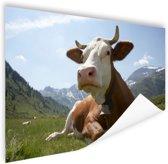 Liggende koe met bel Poster 90x60 cm - Foto print op Poster (wanddecoratie woonkamer / slaapkamer) / Dieren Poster