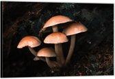 Dibond –Paddestoelen in het Bos– 60x40 Foto op Aluminium (Wanddecoratie van metaal)