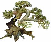 Bonsai Driftwood Aquariumdecoratie Large