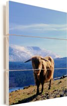 Schotse hooglander met een bergachtig uitzicht Vurenhout met planken 30x40 cm - klein - Foto print op Hout (Wanddecoratie)