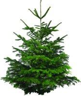 Echte kerstboom Nordmann Excellent 100-125cm