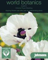 World Botanics - Oosterse Papaver Royal Wedding