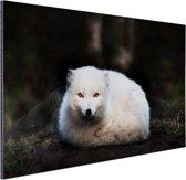 Portret van een poolvos Aluminium 30x20 cm - Foto print op Aluminium (metaal wanddecoratie)