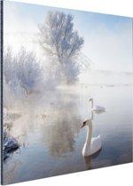 FotoCadeau.nl - Zwanen in de winter Aluminium 50x50 cm - Foto print op Aluminium (metaal wanddecoratie)