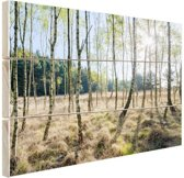 Berkenbomen in Europa Hout 80x60 cm - Foto print op Hout (Wanddecoratie)