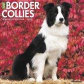 Border Collie Kalender 2020