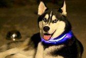 LED verlichte hondenhalsband - blauw - maat M