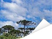 Blauwe lucht met wolken boven de groene parana pine bomen Poster 80x60 cm - Foto print op Poster (wanddecoratie woonkamer / slaapkamer)