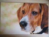 Deurmat 40x60 Beagle