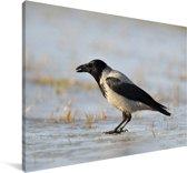 Een bonte kraai staat op de grond Canvas 60x40 cm - Foto print op Canvas schilderij (Wanddecoratie woonkamer / slaapkamer)