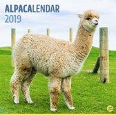 Alpacalendar 2019 | alpaca kalender