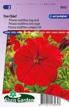 Sluis Garden - Petunia Fire Chief