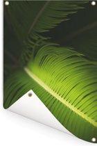 Een close-up van een lichtgekleurde adelaarsvaren Tuinposter 60x90 cm - Tuindoek / Buitencanvas / Schilderijen voor buiten (tuin decoratie)