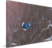 Foto van een vliegende gaai in de winter Canvas 120x80 cm - Foto print op Canvas schilderij (Wanddecoratie woonkamer / slaapkamer)