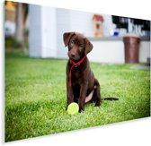 Labrador Retriever puppy met een tennisbal Plexiglas 90x60 cm - Foto print op Glas (Plexiglas wanddecoratie)