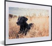 Foto in lijst - Een Labrador Retriever ligt in het hoge gras fotolijst zwart met witte passe-partout klein 40x30 cm - Poster in lijst (Wanddecoratie woonkamer / slaapkamer)
