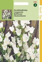 Hortitops Zaden - Campanula Persicifolia Wit
