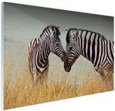 Zebras  Glas 180x120 cm - Foto print op Glas (Plexiglas wanddecoratie) XXL / Groot formaat!
