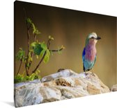 Grondscharrelaar zit op een rots Canvas 140x90 cm - Foto print op Canvas schilderij (Wanddecoratie woonkamer / slaapkamer)