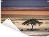 Warme kleuren van de Afrikaanse steppe met de acacia boom Tuinposter 80x60 cm - Tuindoek / Buitencanvas / Schilderijen voor buiten (tuin decoratie)