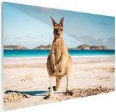 Kangoeroe op het strand Australie Glas 30x20 cm - klein - Foto print op Glas (Plexiglas wanddecoratie)
