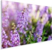 Close up van de hele lavendel Plexiglas 60x40 cm - Foto print op Glas (Plexiglas wanddecoratie)