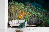 Fotobehang vinyl - Clown vis zwemmend door knalgroen koraal breedte 420 cm x hoogte 280 cm - Foto print op behang (in 7 formaten beschikbaar)