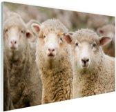 FotoCadeau.nl - Drie witte schapen Glas 90x60 cm - Foto print op Glas (Plexiglas wanddecoratie)