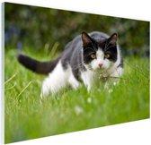 FotoCadeau.nl - Zwart-witte kat op jacht Glas 60x40 cm - Foto print op Glas (Plexiglas wanddecoratie)