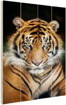 Sumatraanse tijger zwarte achtergrond Hout 80x120 cm - Foto print op Hout (Wanddecoratie)