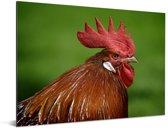 Rode hanenkam van een haan in de natuur Aluminium 40x30 cm - klein - Foto print op Aluminium (metaal wanddecoratie)