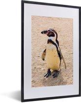 Foto in lijst - Humboldtpinguïn aan de kust fotolijst zwart met witte passe-partout 40x60 cm - Poster in lijst (Wanddecoratie woonkamer / slaapkamer)