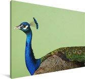 Groene pauw met blauwe kop Canvas 140x90 cm - Foto print op Canvas schilderij (Wanddecoratie woonkamer / slaapkamer)