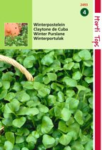 2 stuks Hortitops Postelein Winter Claytonia Perfoliata