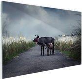 FotoCadeau.nl - Koe met kalf Glas 30x20 cm - Foto print op Glas (Plexiglas wanddecoratie)