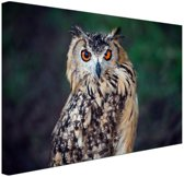 Oehoe uil Canvas 80x60 cm - Foto print op Canvas schilderij (Wanddecoratie)