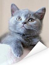 Portret van een korthaar Poster 120x160 cm - Foto print op Poster (wanddecoratie woonkamer / slaapkamer) / Huisdieren Poster XXL / Groot formaat!