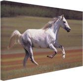 Vrolijk wit paard loopt in grasveld Canvas 180x120 cm - Foto print op Canvas schilderij (Wanddecoratie)
