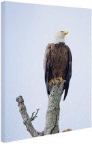 Amerikaanse adelaar Canvas 20x30 cm - klein - Foto print op Canvas schilderij (Wanddecoratie woonkamer / slaapkamer) / Dieren Canvas Schilderijen