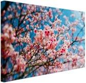Kersenbloesem met blauwe lucht Canvas 120x80 cm - Foto print op Canvas schilderij (Wanddecoratie woonkamer / slaapkamer) / Bloemen Canvas Schilderijen