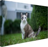 Siamese kat Canvas 30x20 cm - klein - Foto print op Canvas schilderij (Wanddecoratie woonkamer / slaapkamer) / Dieren Canvas Schilderijen