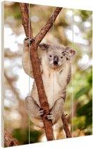 Zwaaiende koala Hout 60x80 cm - Foto print op Hout (Wanddecoratie)