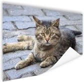Liggende kat op stoep Poster 120x80 cm - Foto print op Poster (wanddecoratie woonkamer / slaapkamer) / Dieren Poster