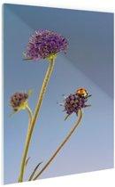 Lieveheersbeestje op bloem blauwe lucht Glas 20x30 cm - Foto print op Glas (Plexiglas wanddecoratie)