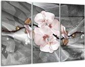 Glas schilderij Orchidee, Bloemen | Grijs | 120x80cm 3Luik | Foto print op Glas |  F007810