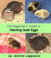The Beginner's Guide to Hatching Quail Eggs